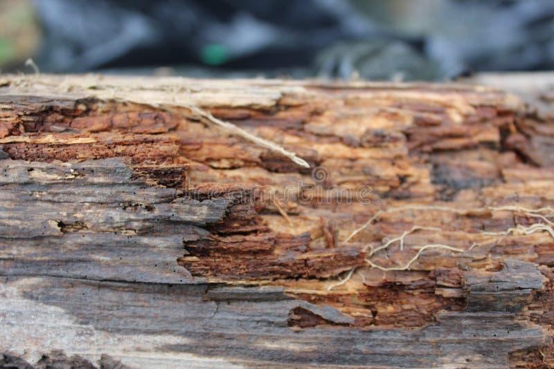 Faule braune Barke im Frühjahr stockbilder
