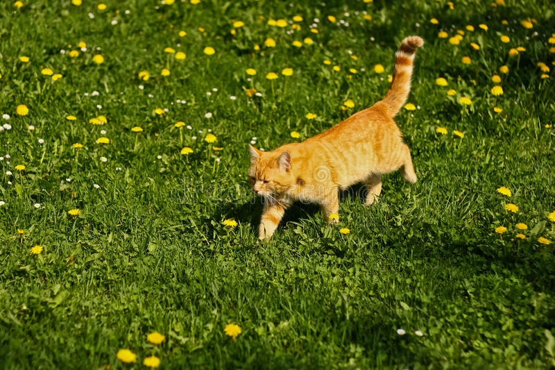 Faule Katze in der Sonne lizenzfreie stockfotos