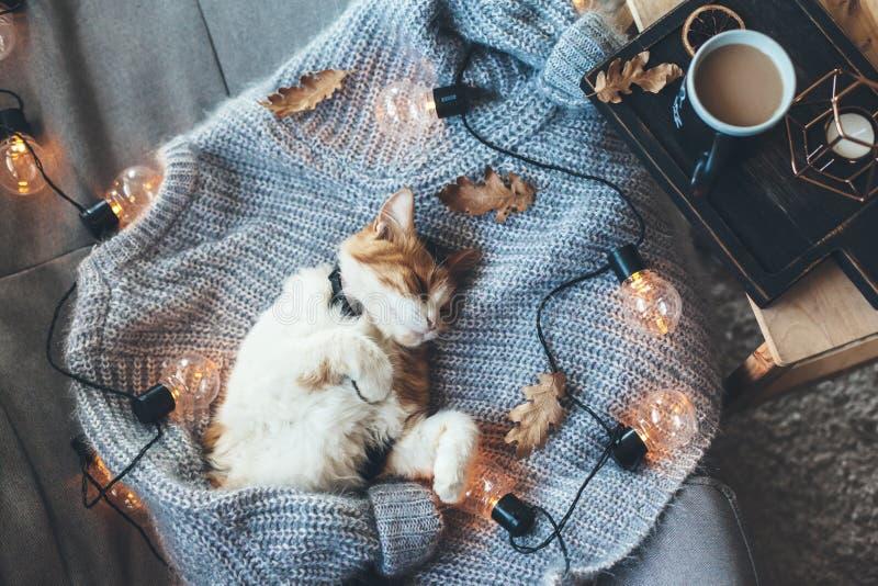 Faule Katze, die auf woolen Strickjacke schläft stockfotos