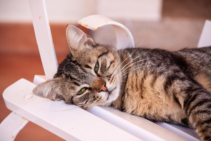 Faule Katze an einem heißen Sommertag lizenzfreie stockfotos