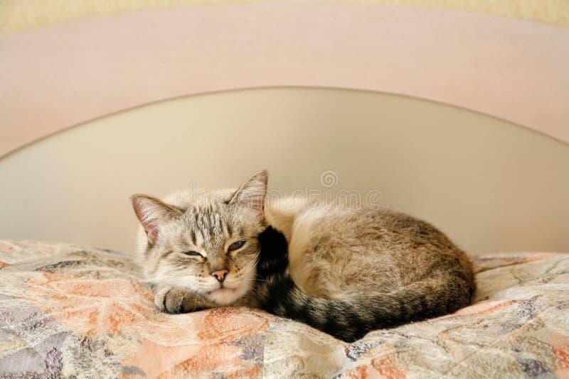 Faule Katze im Schlafzimmer lizenzfreie stockfotografie
