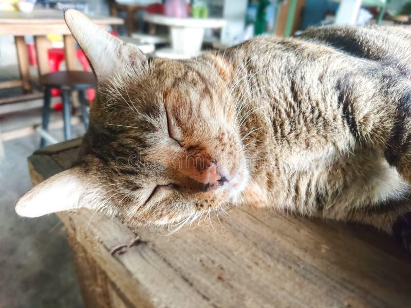 Faule Katze ist Schlaf auf dem Tisch stockfotografie