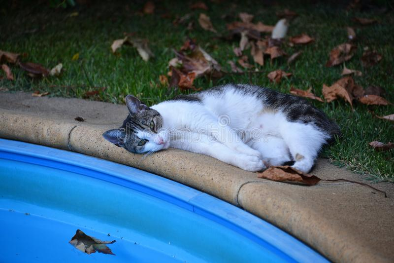 Faule Katze liegt nahe dem Swimmingpool lizenzfreies stockfoto