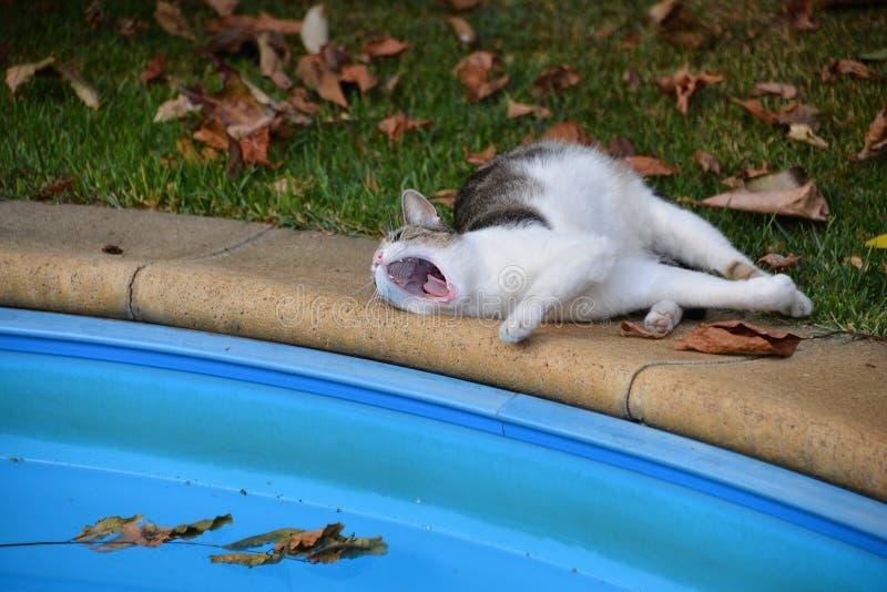 Faule Katze liegt und gähnt nahe dem Pool lizenzfreies stockbild