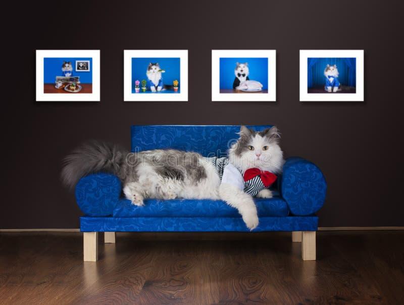 Faule Katze steht auf der Couch still stockfoto