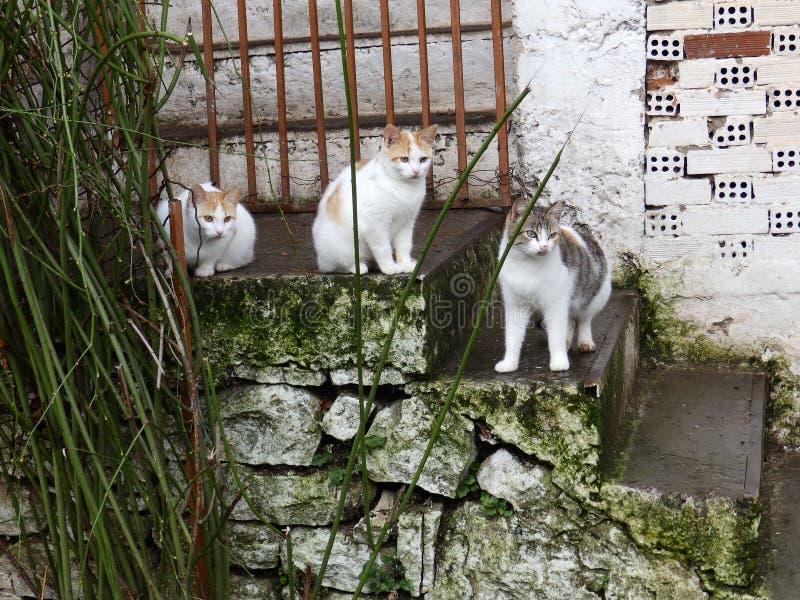 Faule Katzen und alte Treppe lizenzfreie stockbilder
