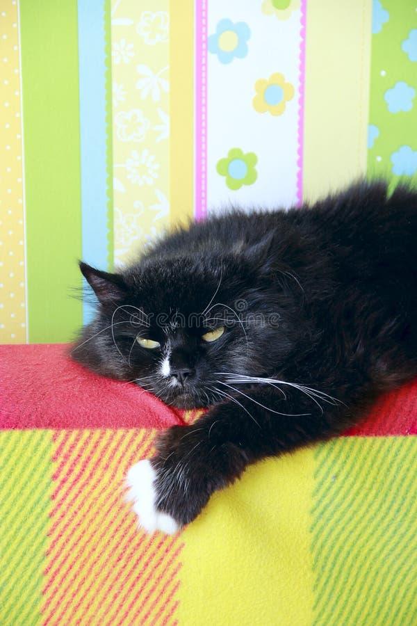 Faule schwarze Katze, die auf farbige Rückseite des Sofas legt stockfoto