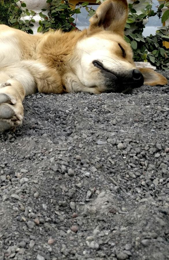 Fauler Hund lizenzfreie stockfotografie