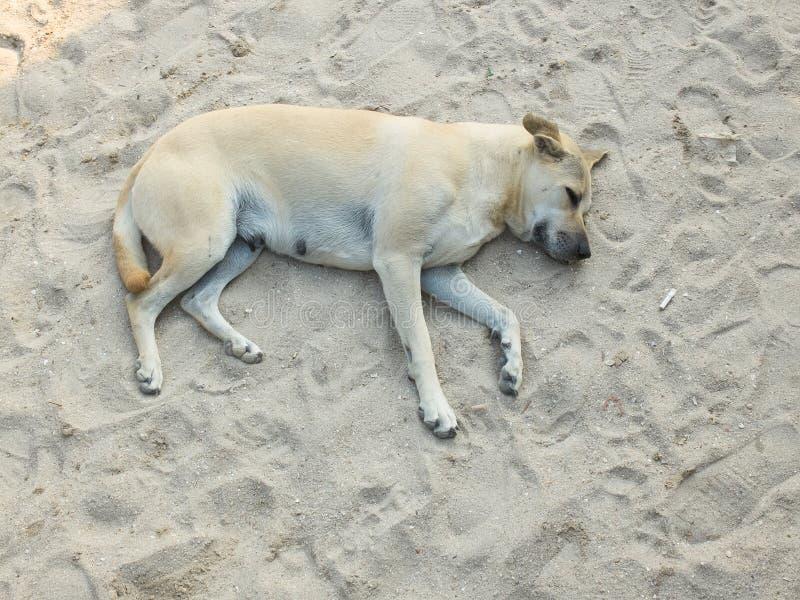 Fauler Hund, der auf Sandstrand sich entspannt und schläft lizenzfreies stockbild