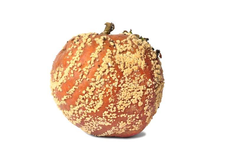 Faules Apple auf weißem Hintergrund stockbilder