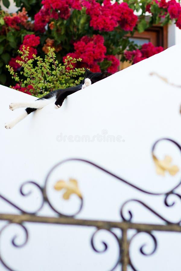 Faules Schwarzweiss-Katzenschlafen lizenzfreie stockfotografie