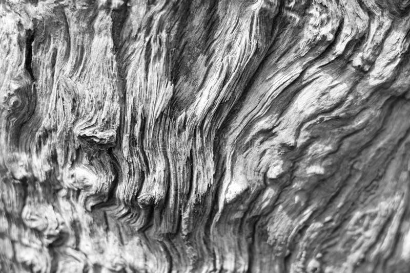 Faules Treibholz organischer Beschaffenheits-Hintergrund lizenzfreies stockbild