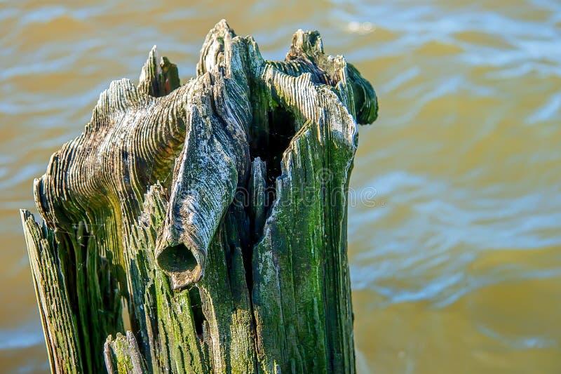 Fauliger Baum stockfotografie