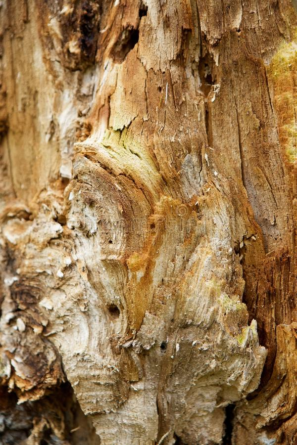 The fault tree trunk royalty free stock photos