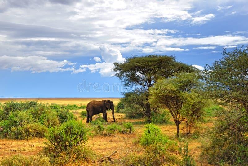 Fauna africana fotos de archivo