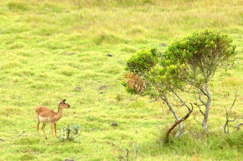 Fauna africana fotos de archivo libres de regalías