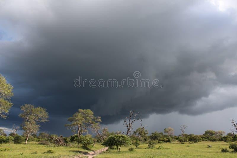 Fauna africana - tormenta - el parque nacional de Kruger imagen de archivo libre de regalías