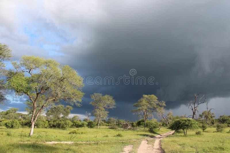 Fauna africana - tormenta - el parque nacional de Kruger foto de archivo