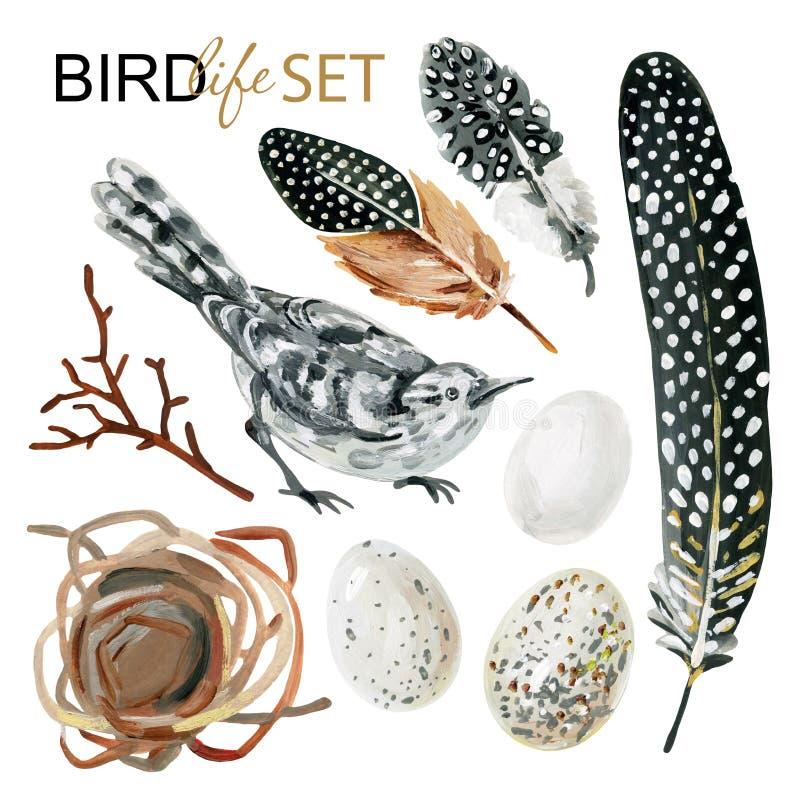 Fauna avícola fijada con las plumas manchadas a mano, pájaro, huevos, rama, jerarquía stock de ilustración