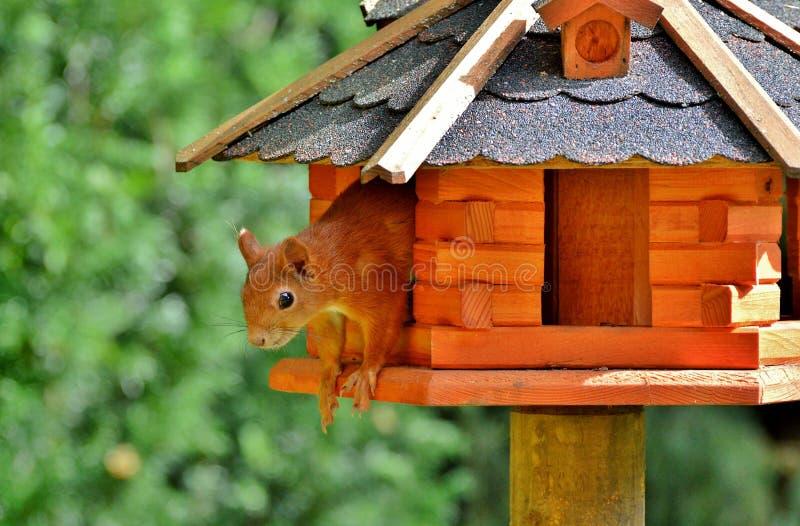 Fauna, Bird Feeder, Wood, Squirrel royalty free stock photography