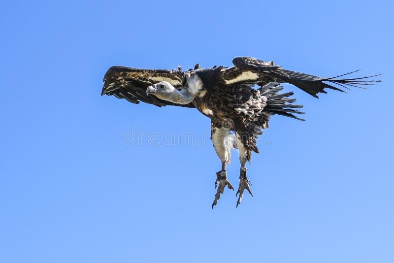 Fauna, Bird Of Prey, Accipitriformes, Eagle Free Public Domain Cc0 Image
