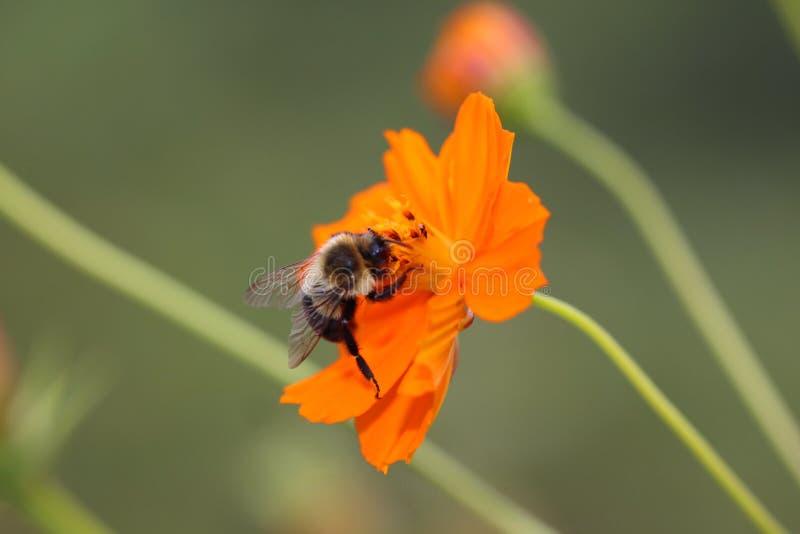 Fauna da flora
