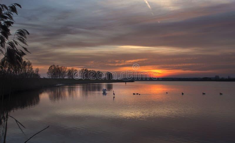 Fauna de la puesta del sol foto de archivo