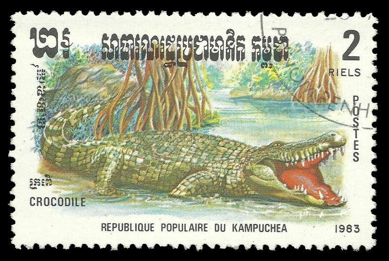 Fauna dos animais selvagens, répteis da série, crocodilo imagens de stock royalty free