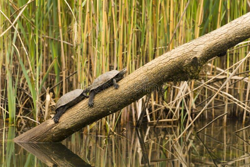 Fauna en el río imágenes de archivo libres de regalías