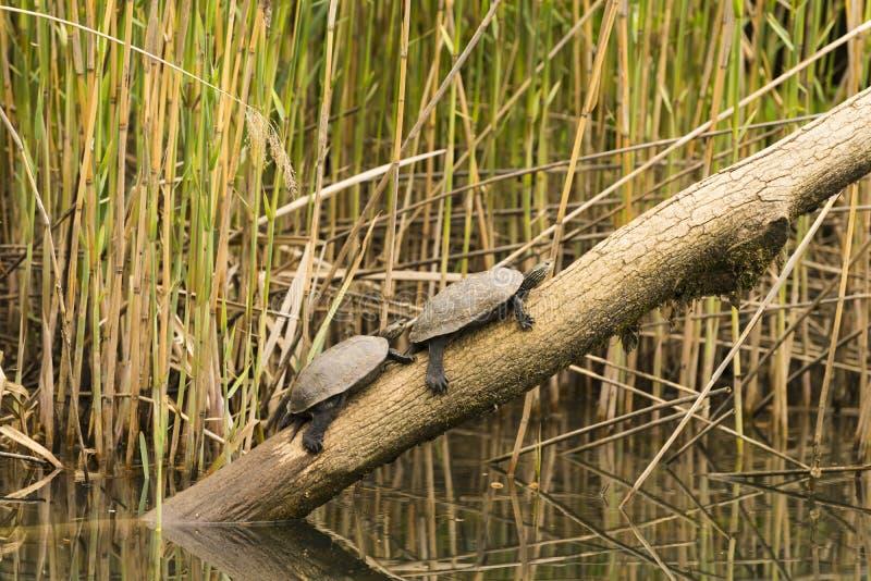 Fauna en el río fotografía de archivo libre de regalías