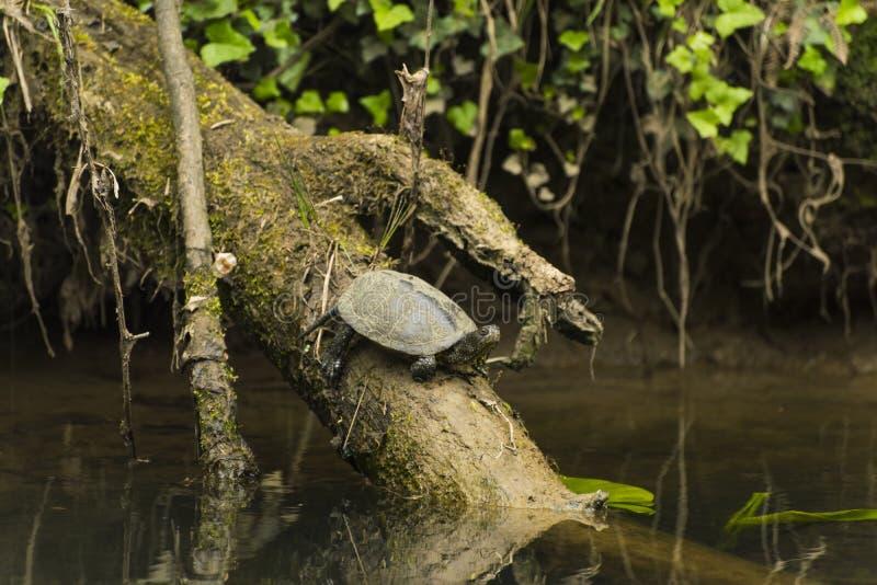 Fauna en el río foto de archivo