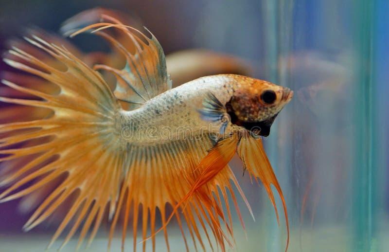 Fauna, Fish, Marine Biology, Organism stock photos