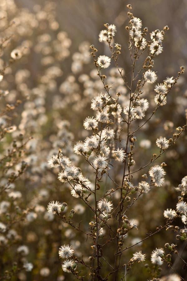 Download Fauna kwitnie dzikiego obraz stock. Obraz złożonej z jaskrawy - 7156503