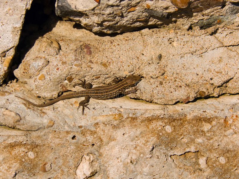 Download Fauna a lizard stock image. Image of animal, warm, claws - 7614165
