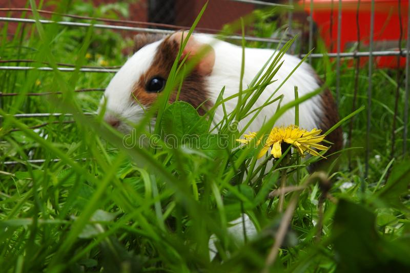 Fauna, Mammal, Grass, Whiskers royalty free stock images