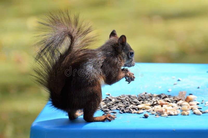 Fauna, Mammal, Squirrel, Rodent Free Public Domain Cc0 Image