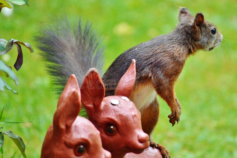 Fauna, Mammal, Squirrel, Wildlife Free Public Domain Cc0 Image