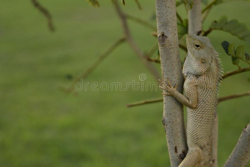 Fauna, Mammal, Wildlife, Terrestrial Animal royalty free stock photography