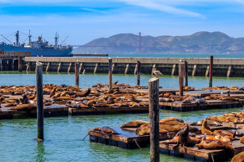 Fauna marina en el embarcadero 39 en San Francisco imagen de archivo