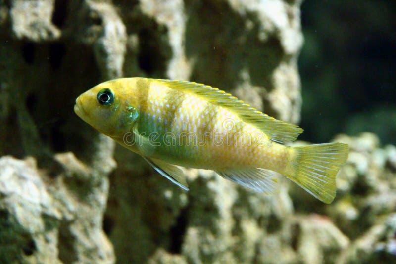 Fauna, Marine Biology, Organism, Fish stock images