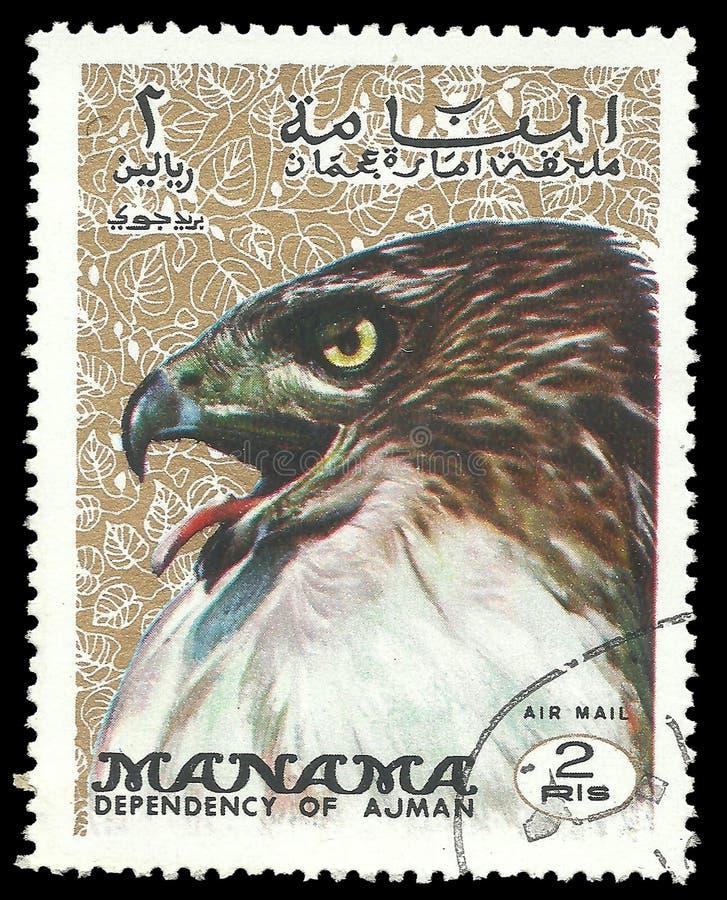 Fauna, Reihen-Vögel, Eagle lizenzfreie stockfotografie