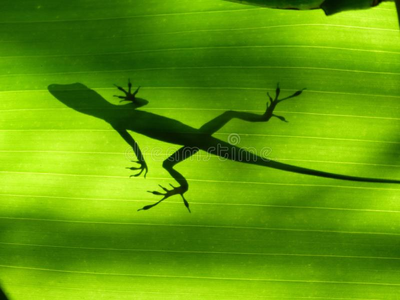 Fauna, Reptile, Leaf, Organism royalty free stock photo