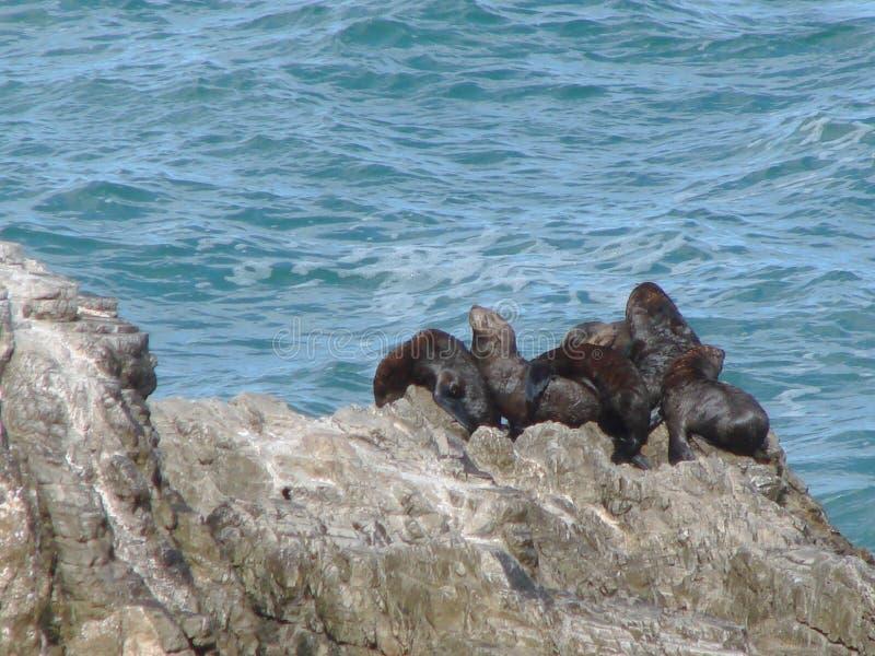 Fauna, Sea, Coast, Rock stock images