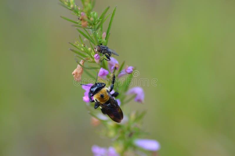 Fauna selvatica del campo di Branan e area ambientale fotografia stock libera da diritti