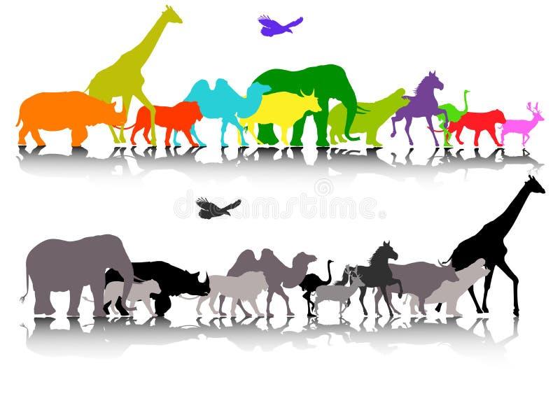 Fauna selvatica dell'animale di safari illustrazione vettoriale