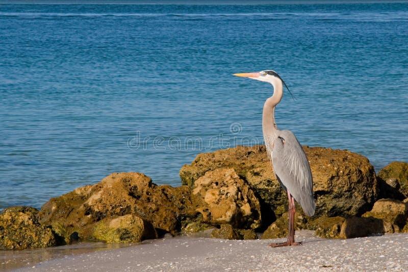 Fauna selvatica delle aree umide fotografia stock libera da diritti