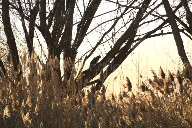 Fauna selvatica di Loch Lomond immagini stock