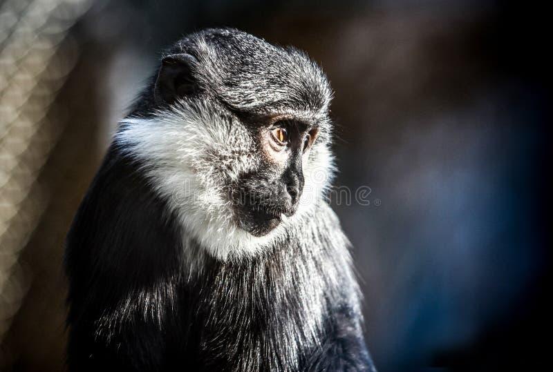Fauna selvatica falsa immagine stock libera da diritti