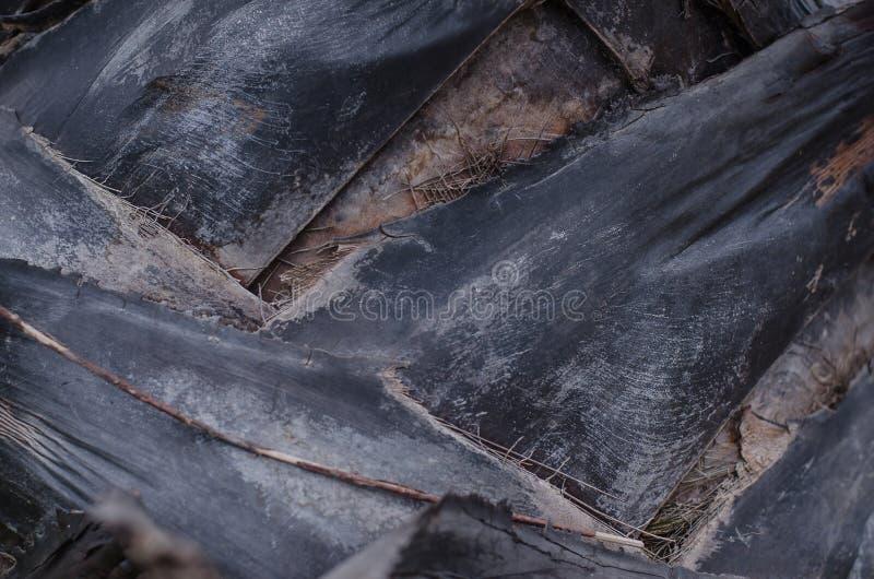 Fauna selvatica naturale di visualizzazione ad albero di viaggio di estate della corteccia dell'artiglio, primo piano di legno fotografia stock libera da diritti