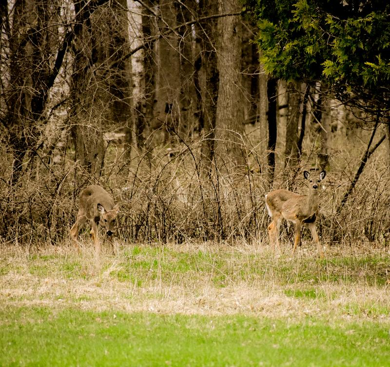 Fauna selvatica nel parco di stato della spiaggia di Harrington nel Belgio Wisconsin fotografia stock libera da diritti